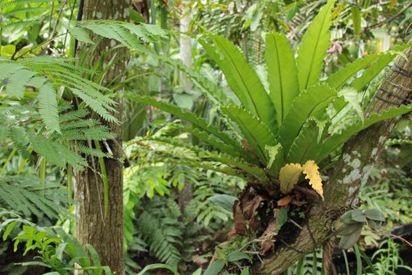 Botanic 19