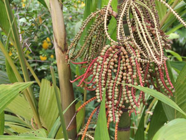 Botanic 36