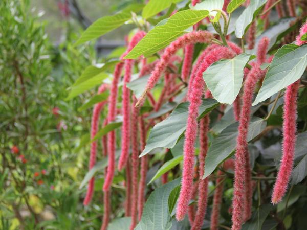 Botanic 38