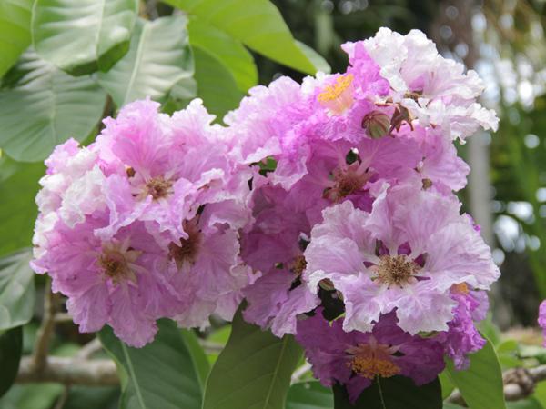 Botanic 53