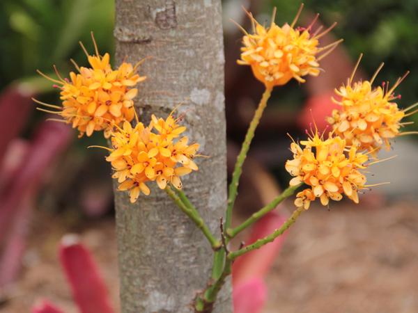 Botanic 58
