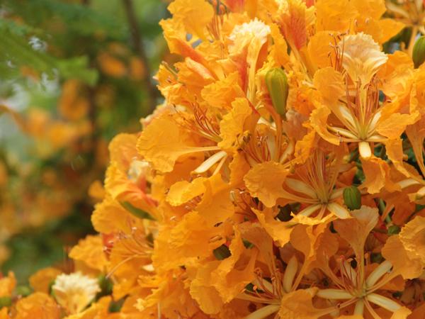 Botanic 63