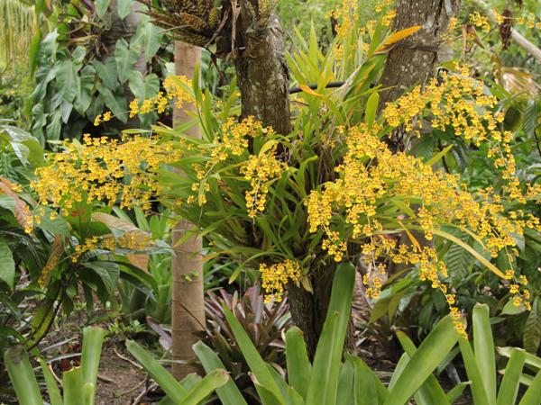 Botanic 64