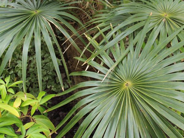 Botanic 8