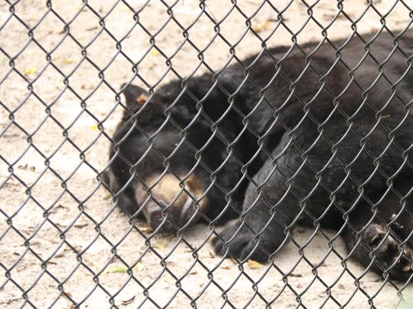 Zoo 10